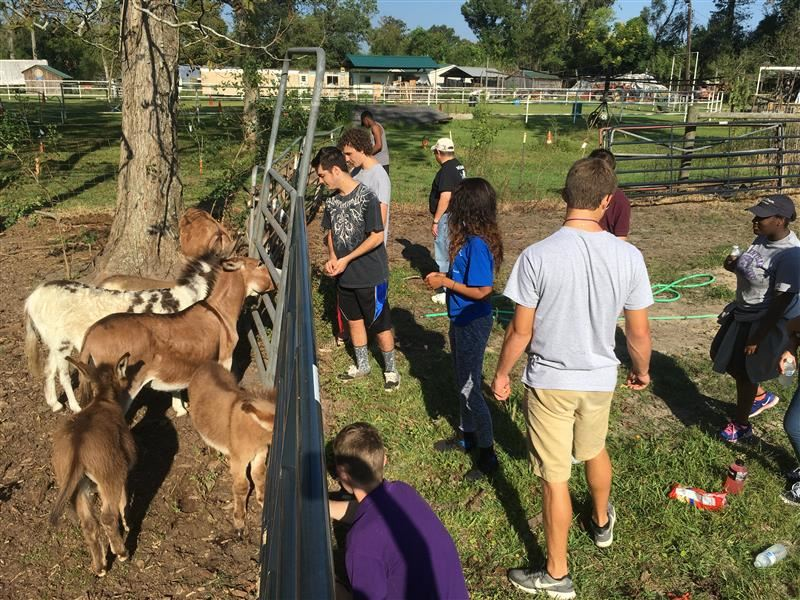 Feeding baby donkeys at the GNO Therapeutic Riding Center